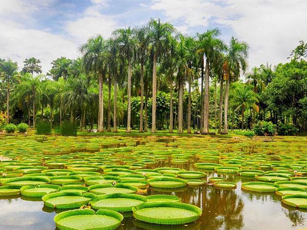 如何才能彻底戒赌热带植物园