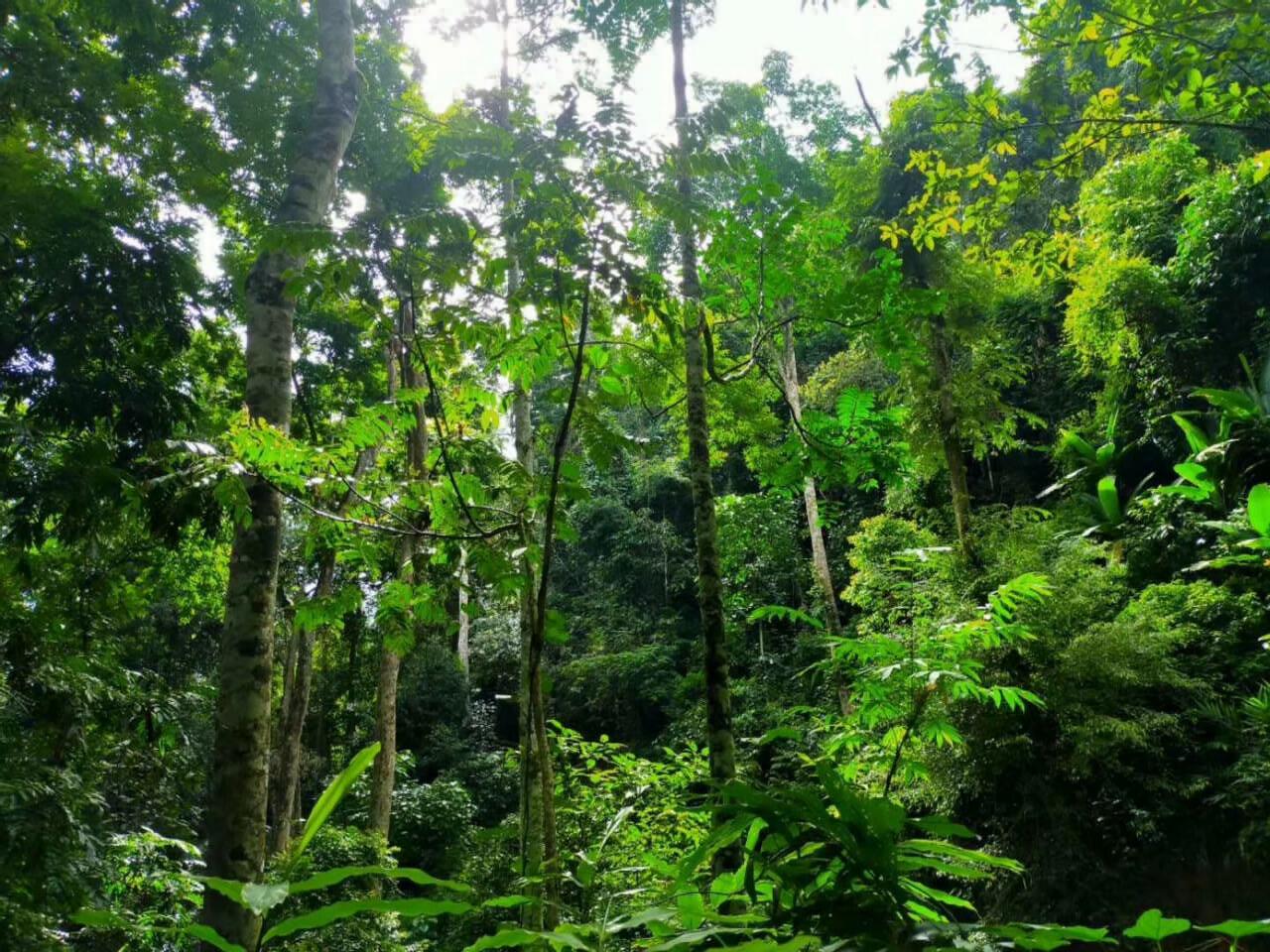 如何才能彻底戒赌热带雨林徒步穿越拓展团建