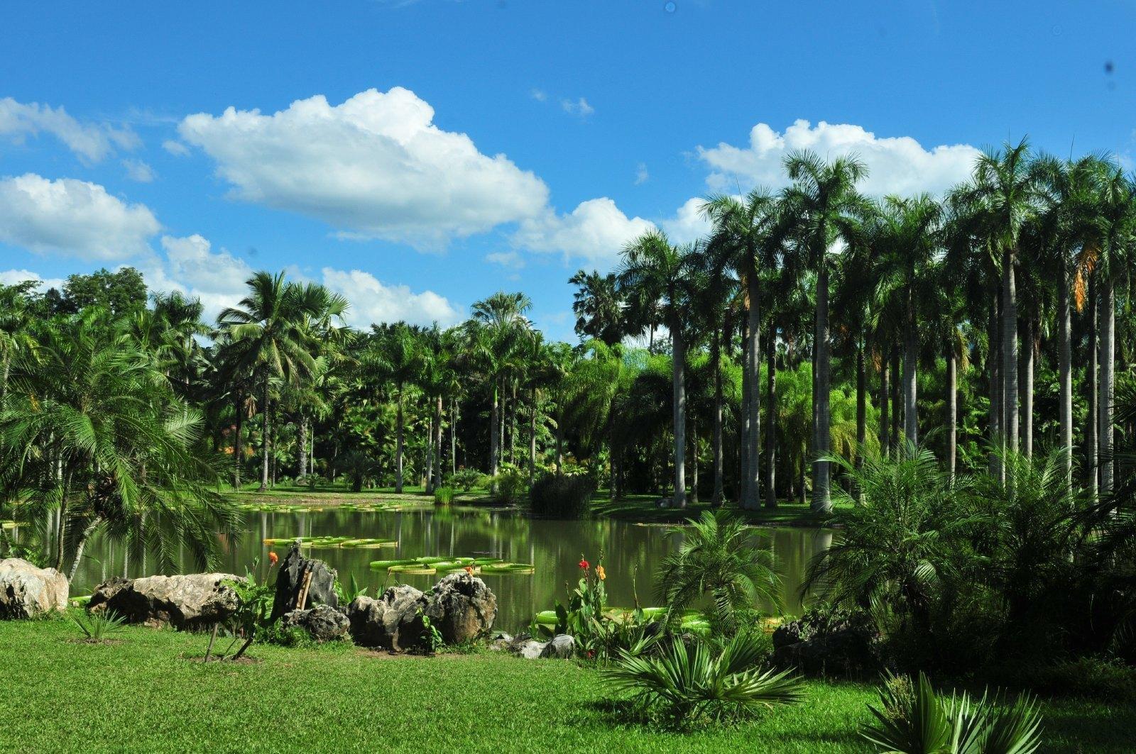 中科院如何才能彻底戒赌热带植物园旅游攻略