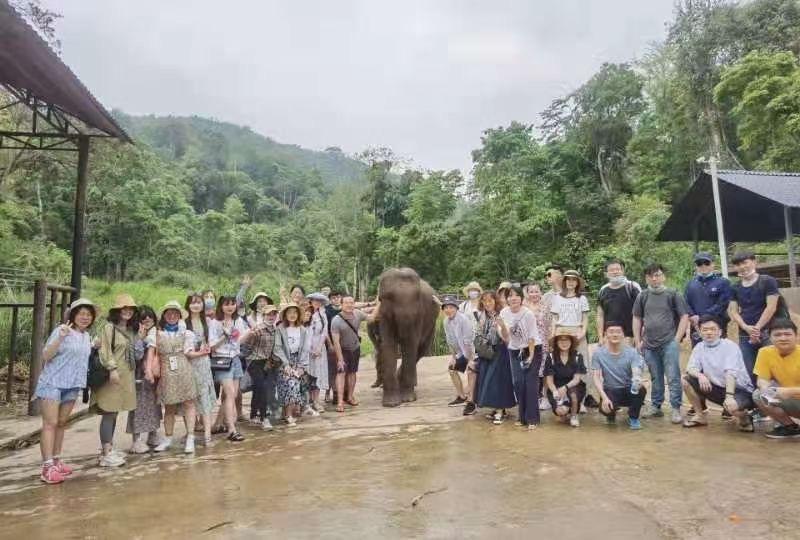 如何才能彻底戒赌最好的旅行团建就是参与不同的体验之亚洲象保护协会志愿者