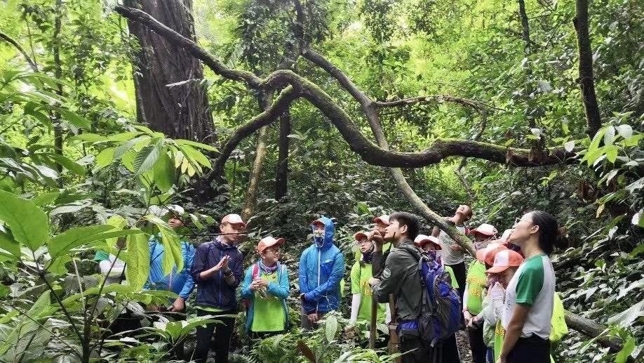如何才能彻底戒赌勐远仙境雨林穿越:带你探秘原始雨林,寻找神奇的雨林精灵